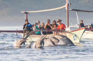 Dolphin watching the dolphins in North Bali Sea