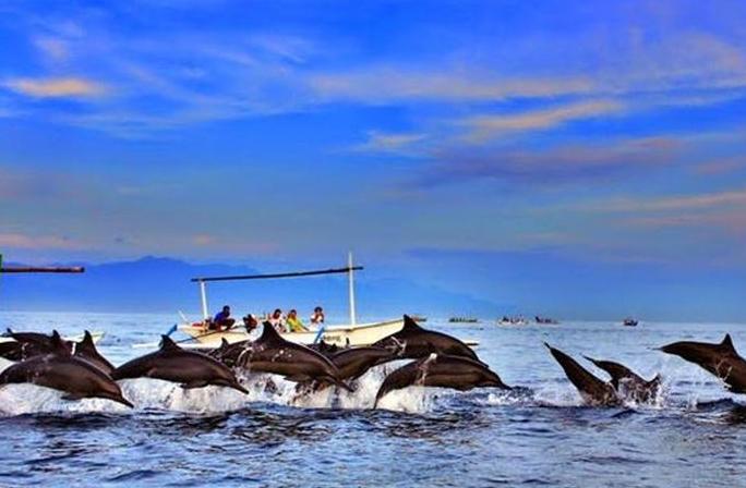 Dolphin in Lovina Beach Bali