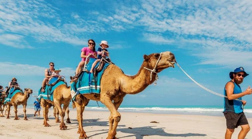 camel in Bali -family
