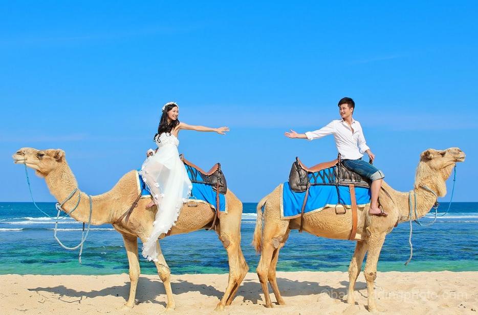camel in Bali prewedding