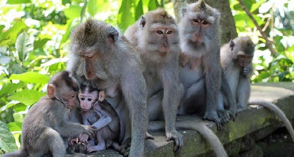 monkey forest ubud family