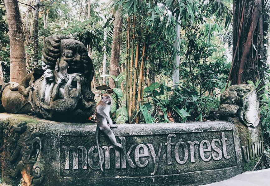 monkey forest ubud gate