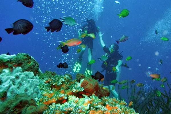 scuba dive in tanjung benoa new