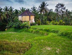 39+ Bali Yoga Retreat 2020 Ubud Pics