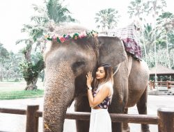 Get Ubud Bali Elephant Sanctuary PNG